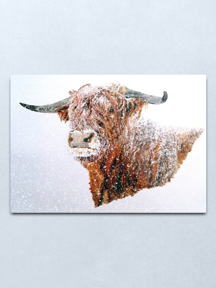 Alternate view of Snowy Highland Cow in Falling Snow - Wall Art Metal Print