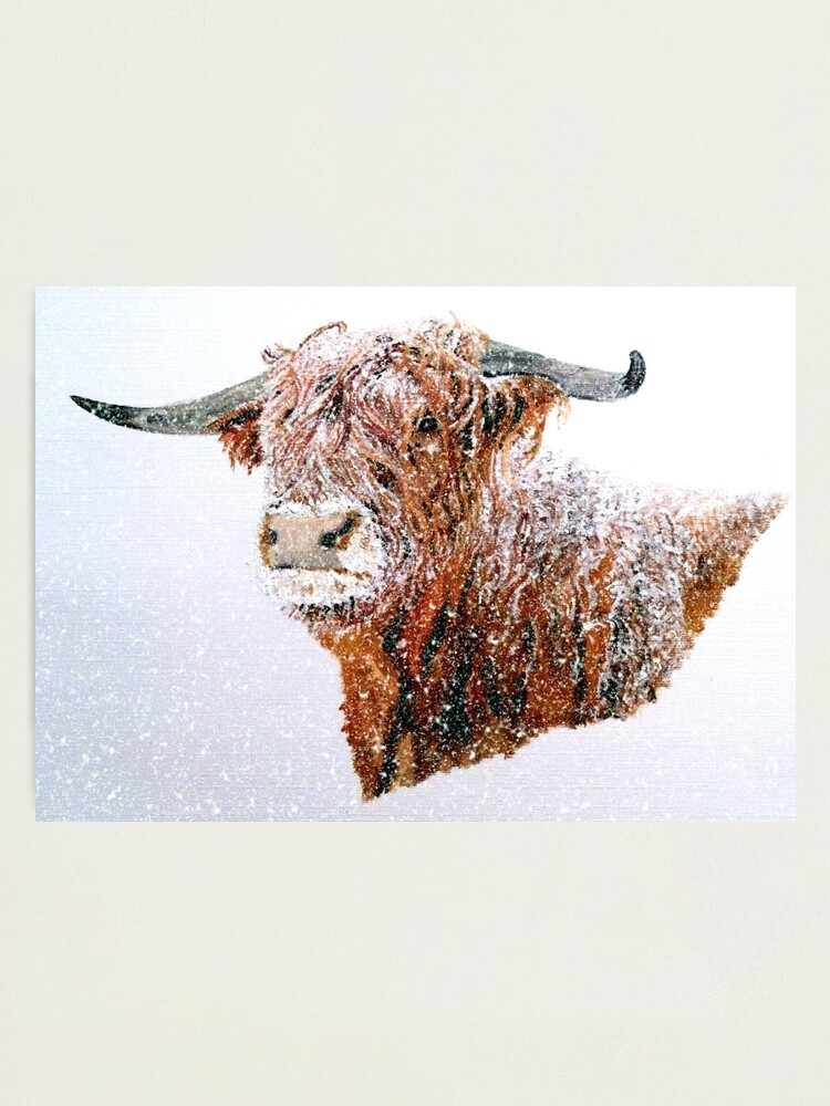 Alternate view of Snowy Highland Cow in Falling Snow - Wall Art Photographic Print