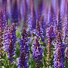 The colour Purple by BizziLizzy