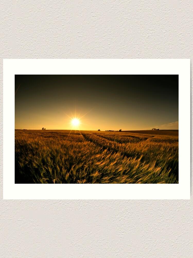 Alternate view of Sunny crop Art Print