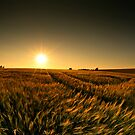 Sunny crop by james  thow