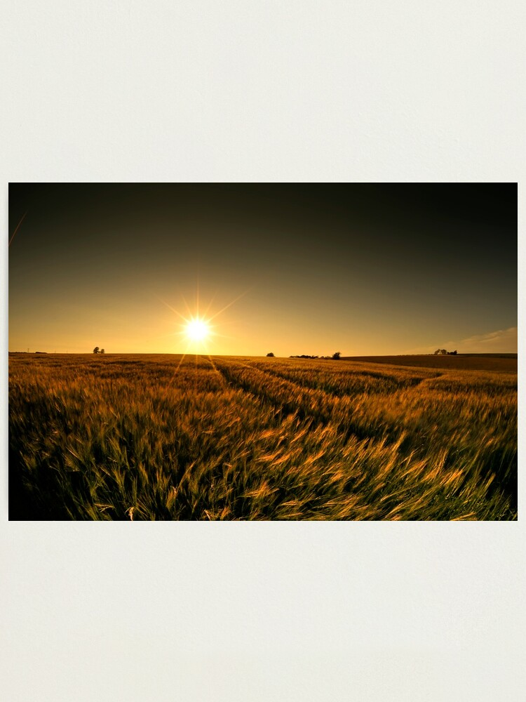 Alternate view of Sunny crop Photographic Print