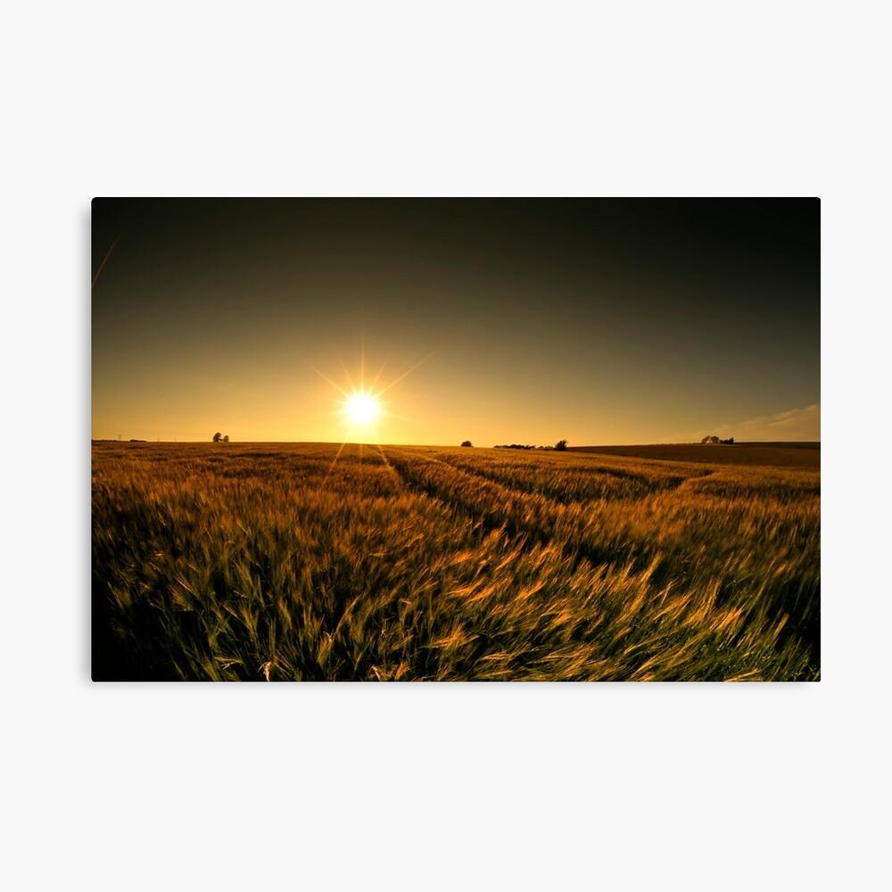 Sunny crop Canvas Print