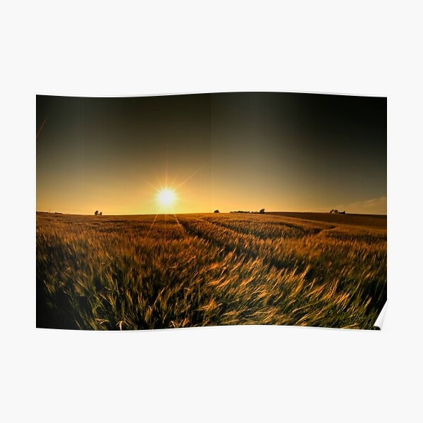 Sunny crop Poster