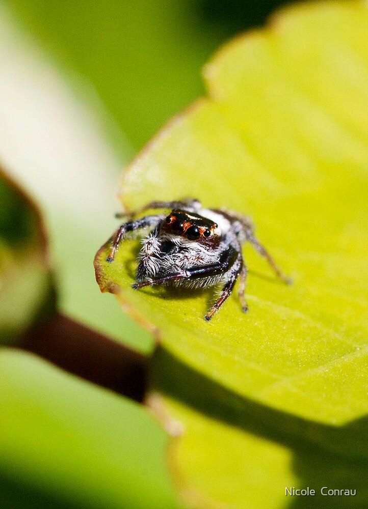 Mr Spider by NicoleConrau