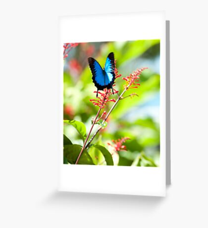 Beautiful Blue - Ulysses butterfly Greeting Card