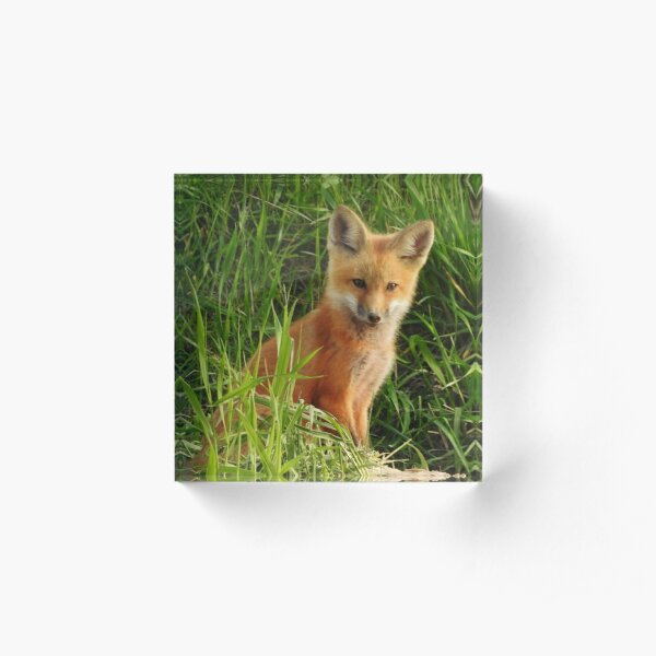 Young Red Fox Acrylic Block