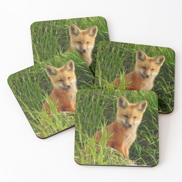 Young Red Fox Coasters (Set of 4)