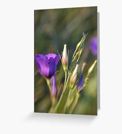 Ready to Bloom Greeting Card