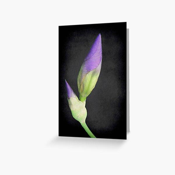 Popping Up Irises ©  Greeting Card
