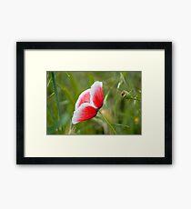 Little Poppy II Framed Print