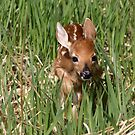 litte Fawn by whisperjo