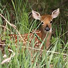 Little Fawn #2 by whisperjo