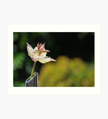 The Unknown Flower Art Print