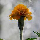 It's a flower... ©  by Dawn Becker