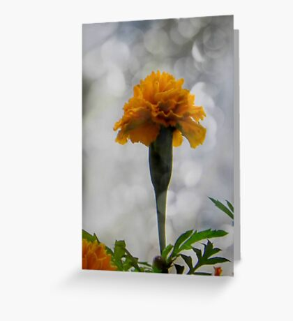 It's a flower... ©  Greeting Card