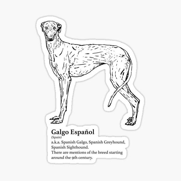 Galgo Español Sticker