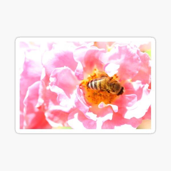 Swimming in Pollen Sticker