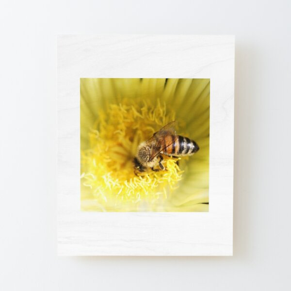 Nose Dive into Pollen Wood Mounted Print