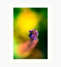 Cavorting with grasshoppers and bumble bees Art Print