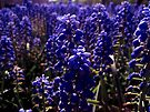 purple trees by schizomania