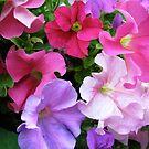 Colorful Flowers by Ashli Amabile