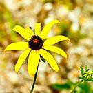 Yellow Daisy by Benjamin Sloma