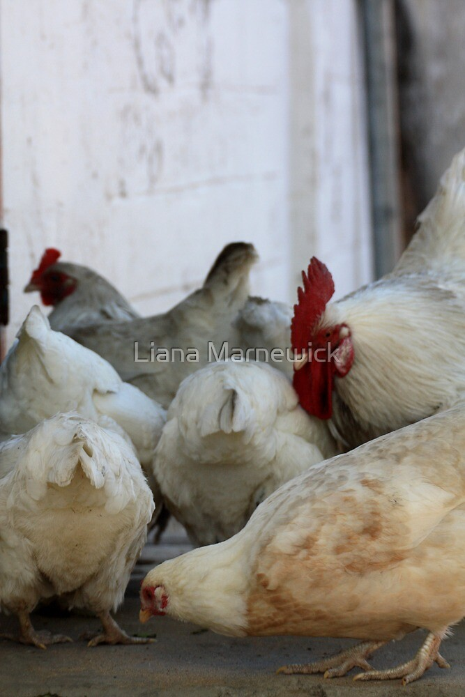 Chicken #2 by Liana Marnewick