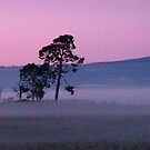 Mist at Sunset by DEB CAMERON