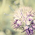 Wildflower in pastell Tones by Katy Opitz