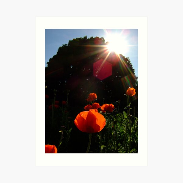Burst of sunshine at Kew Gardens Art Print