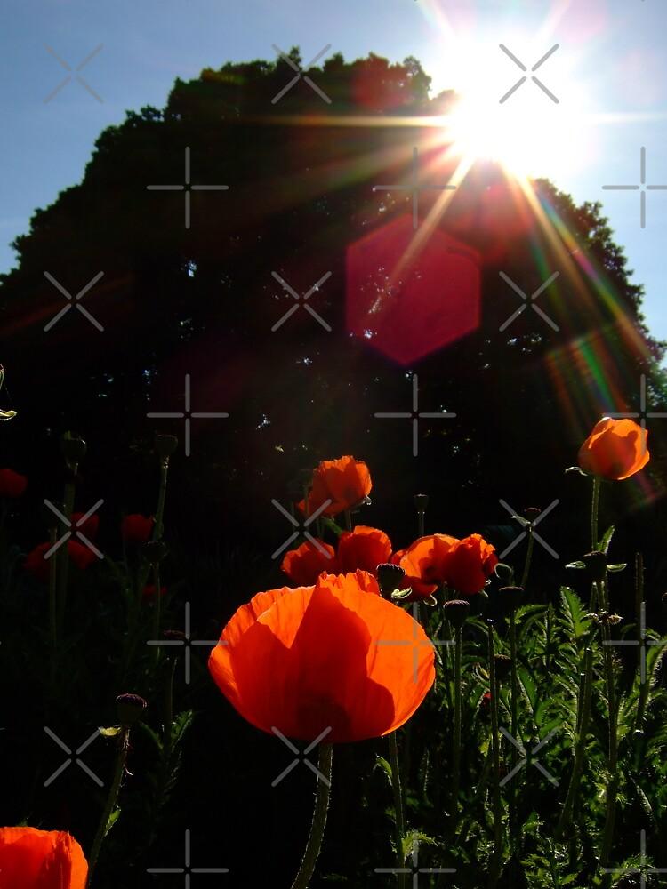 Burst of sunshine at Kew Gardens by Themis