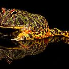 Argentine Horned Frog by Val Saxby