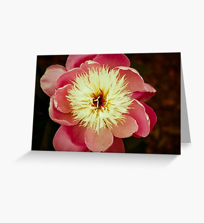 Big Soft Heart Greeting Card