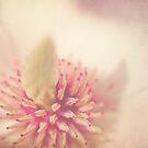 Magnolia in full Bloom by Katy Opitz