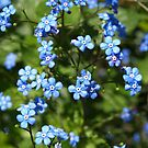 Forget Me Not. by Lee d'Entremont