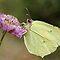 Butterfly in solo