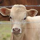 Little White Calf by DebbieCHayes