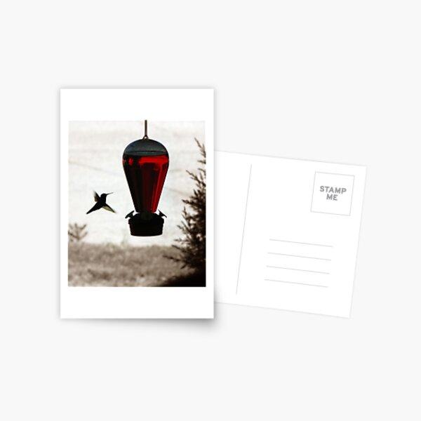 Hummingbird, don't fly away, fly away... Postcard