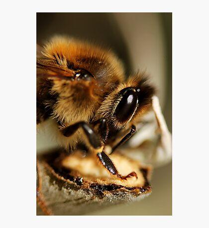 Buzz Bee Photographic Print