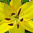 mellow yellow by Farah  Rose