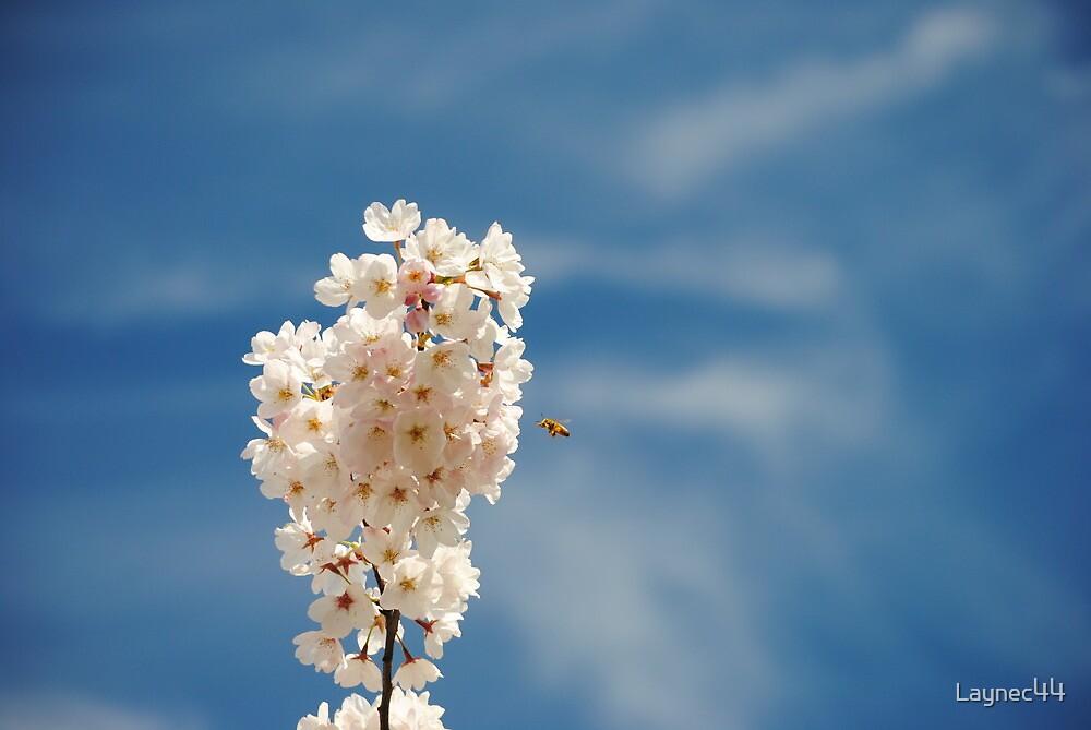 Pollination by Laynec44
