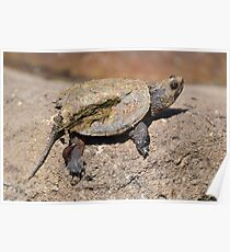 Turtle caked with mud. Poster