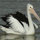 Pelican Portrait by Robert Abraham