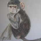 Young Baboon by Cathacat