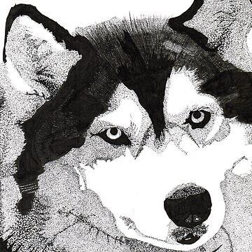 Husky by kb1620