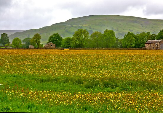 Buttercup Meadow by Trevor Kersley