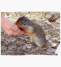 Hand Feeding a Marmet, Poster