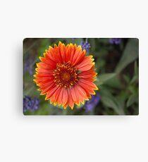 Blanket Flower  Leinwanddruck