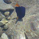 Fish at My Feet 3 by Chris Baker